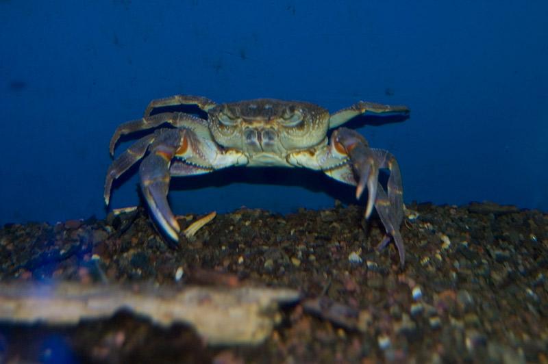 acquario di bolsena | visit bolsena - turismo eventi itinerari ... - Soggiorno Lago Di Bolsena